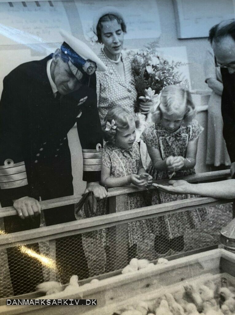 Kong Frederik IX med Dronning Ingrid, og to af prinsesserne. Kjølbæk har lige rakt Prinsesse Margrethe en kylling fra FUNKI udstillingen