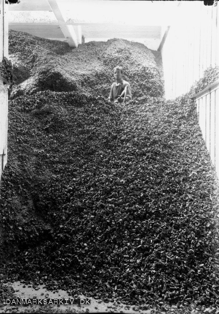 Cikorierødder på Rich's Kaffesurogat Fabrikker lå i Valby - 1927